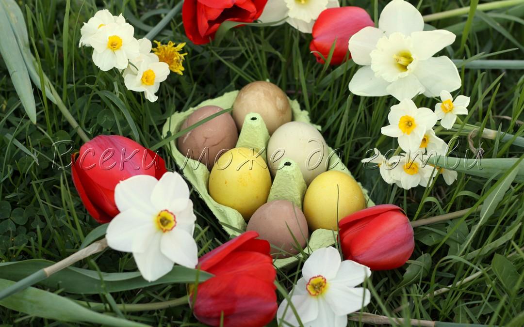 Моят опит: Вижте как боядисах великденските яйца с натурални бои